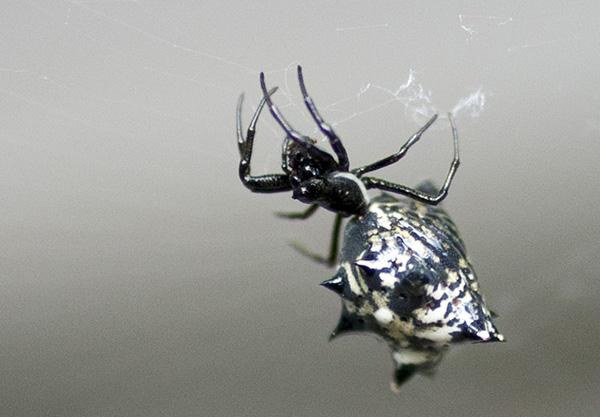 Spider Aug 13