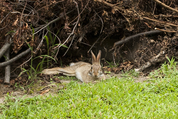 Rabbit Aug 12