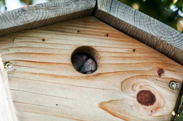 Rats Sept 21