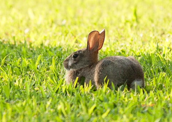 Rabbit July 29