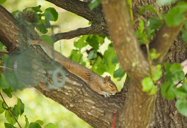 Squirrel July 8