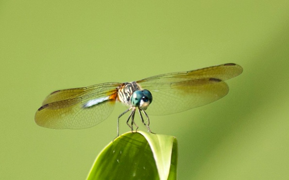 Dragonfly July 23