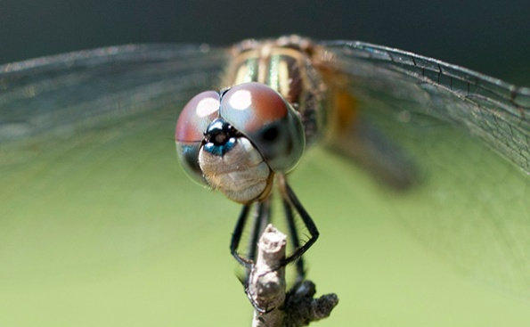Dragonfly July 26