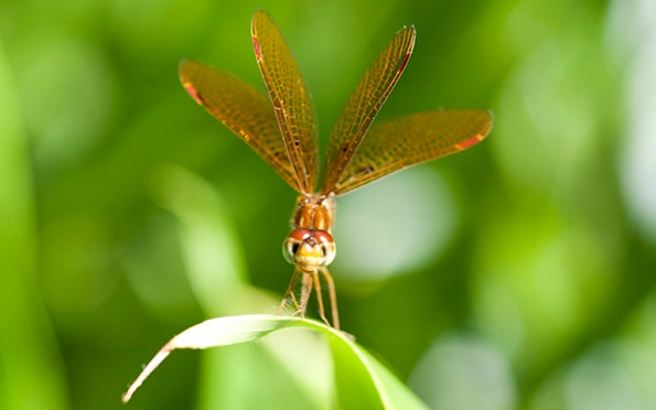 Dragonfly July 28