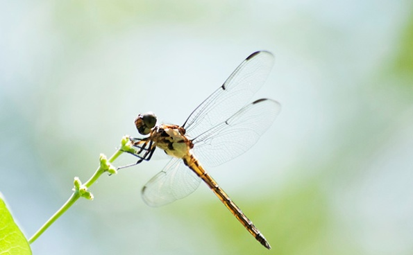 Dragonfly June 26