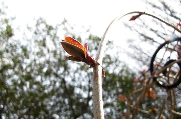 Honeysuckle Feb 14