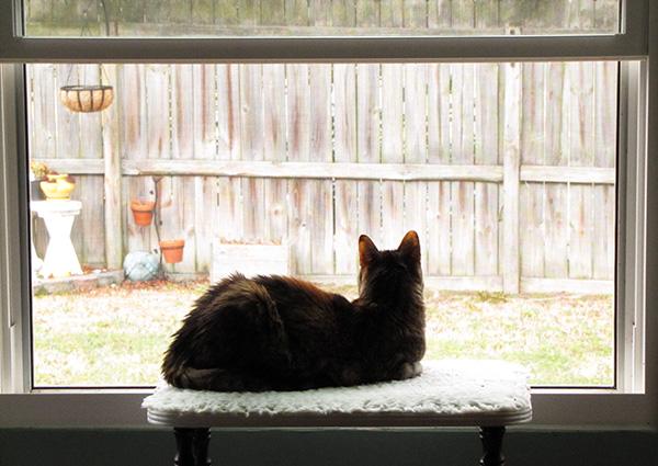 Cat March 10