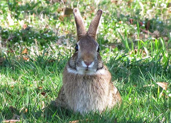 Rabbit March 17