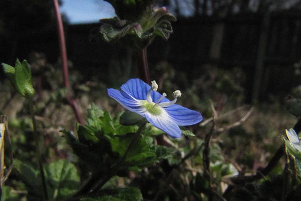 Weeds March 16