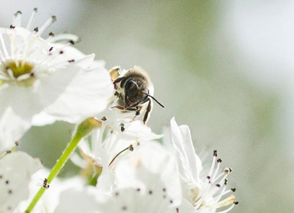 Bee April 10