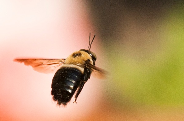 Bee April 22