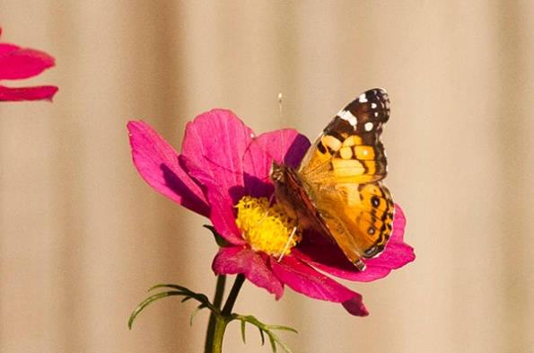Butterfly April 22