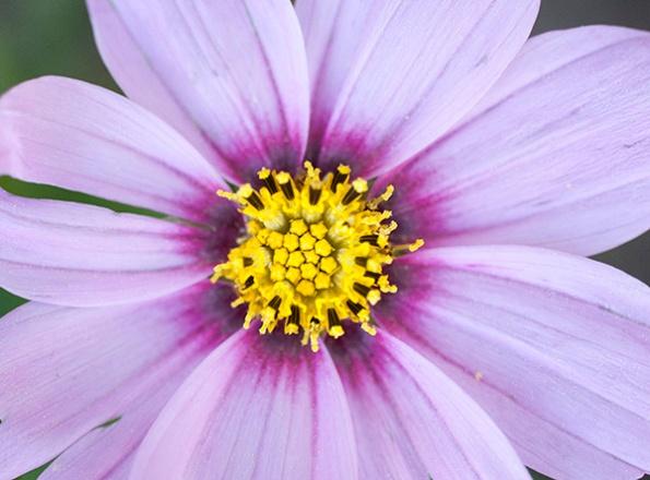 Flowers April 22
