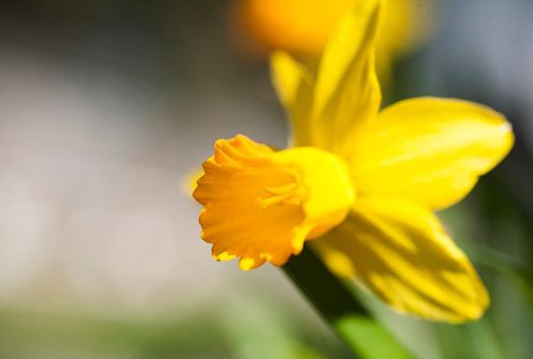 Flowers April 6