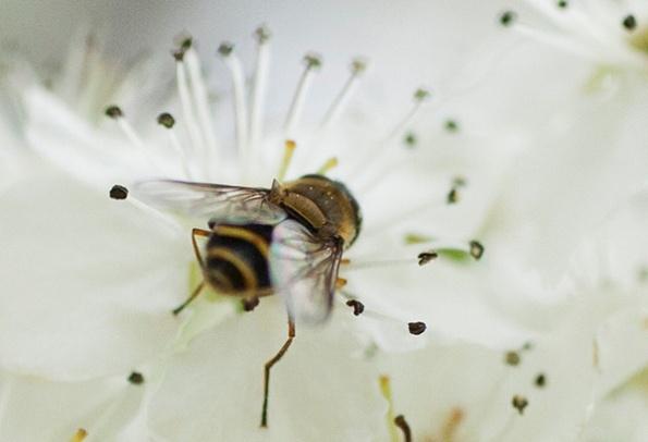Fly April 10
