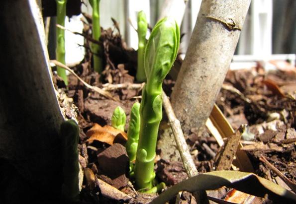Milkweed April 6
