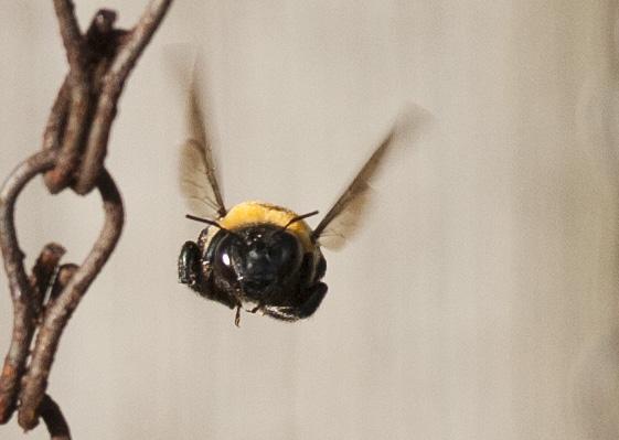 Bee April 29