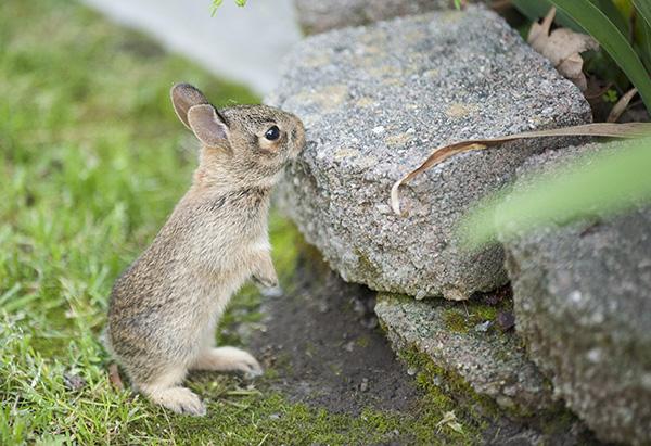 Rabbits May 10
