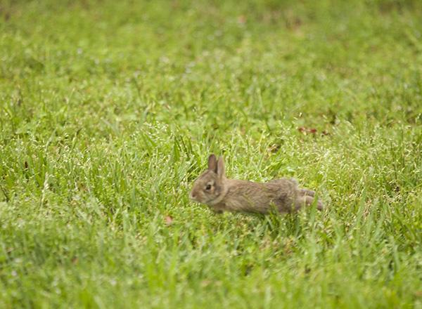 Rabbits May 11
