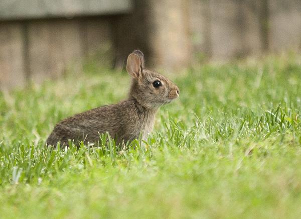 Rabbits May 26