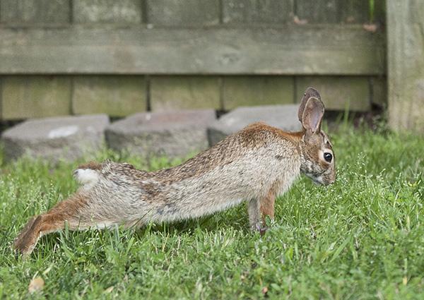 Rabbits May 9