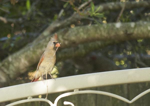 Cardinal May 9