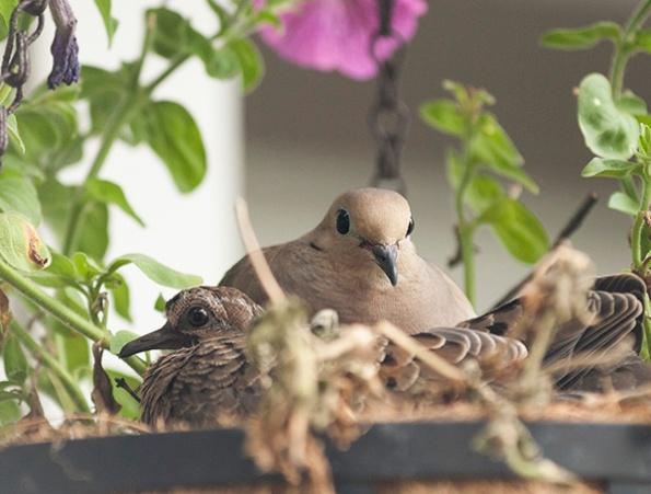 Dove June 11