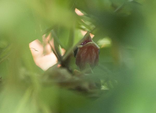Nestling May 31