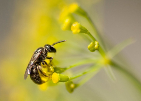 Bee July 3