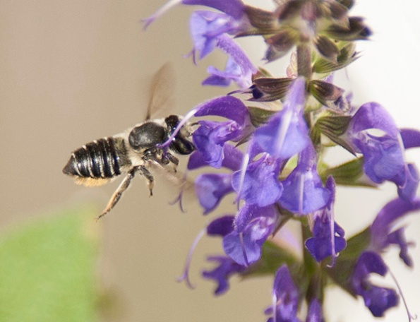 Bee July 9