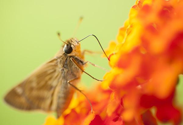 Butterfly July 1
