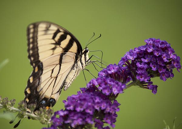 Butterfly July 10