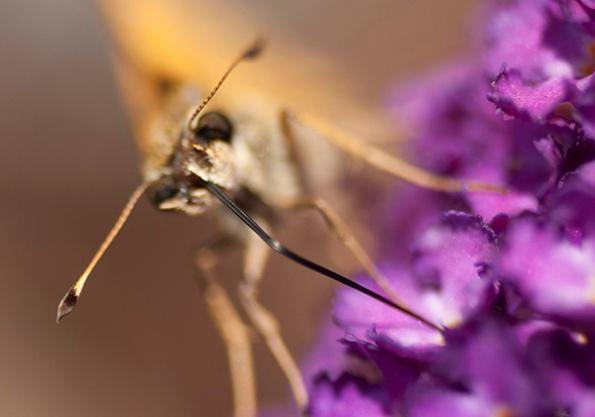 Butterfly July 3
