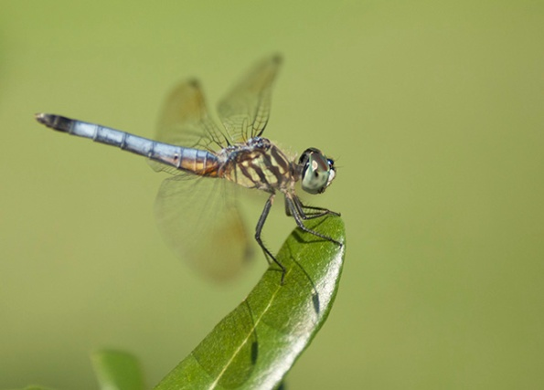 Dragonfly July 10