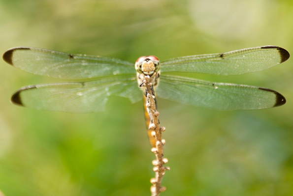 Dragonfly June 29