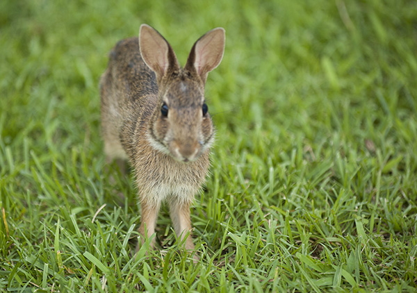 Rabbit June 29