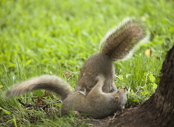 Squirrel June 26