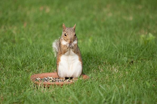 Squirrel June 28