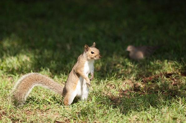 Squirrel June 29