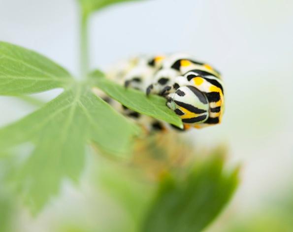 Caterpillar August 20