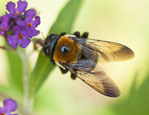 Bee July 17