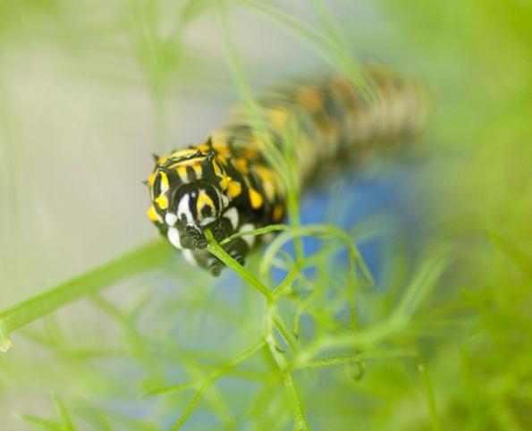 Caterpillar Sept 28