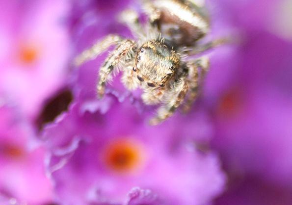 Spider Sept 28
