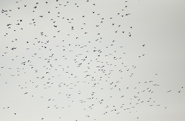 Birds Dec 24
