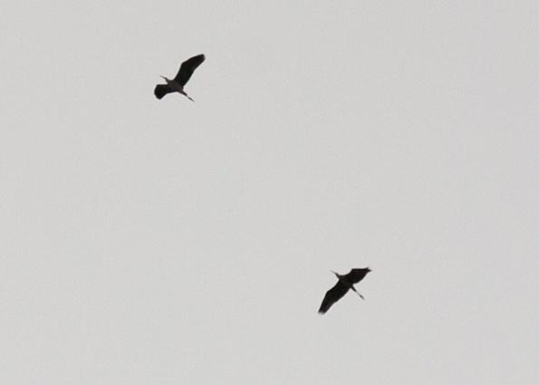 Birds Nov 9