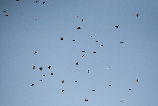 Flock Nov 20