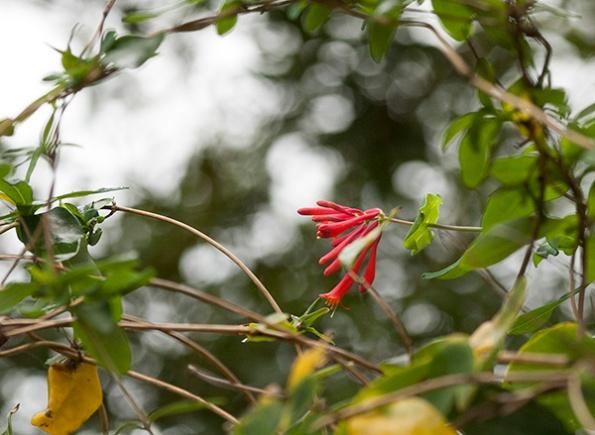 Flowers Nov 9