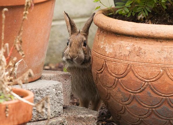 Rabbit Nov 9