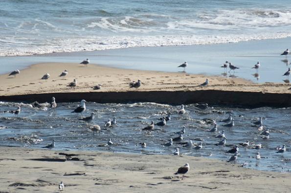 Beach Feb 1