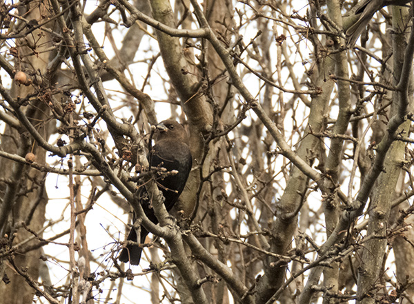 Bird Feb 20
